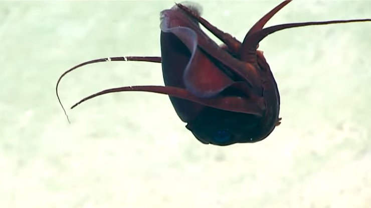 В Мексиканском заливе обнаружили неизвестное существо (видео)