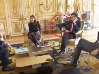 Пес президента Франции помочился в камин во время совещания своего хозяина с министрами (видео)