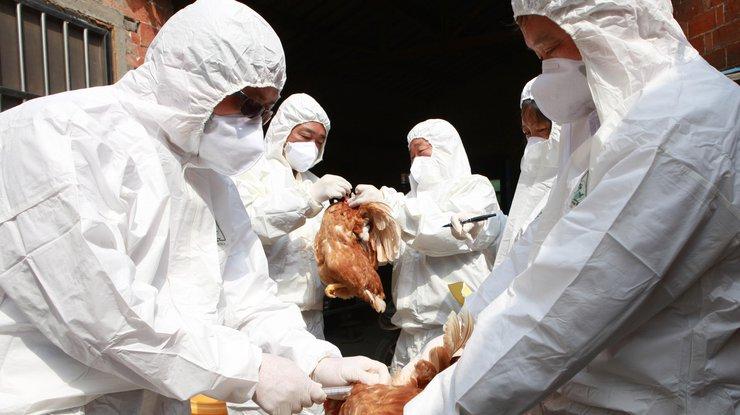 Людям грозит опасность: в Китае обнаружили новый вид гриппа