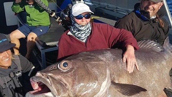 Пенсионерка поймала в Австралии невероятно огромного окуня. Фотофакт