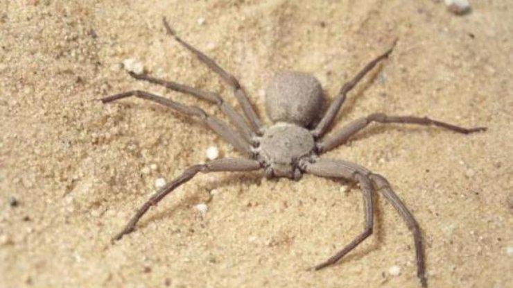 Почему люди боятся пауков и змей: ответ ученых