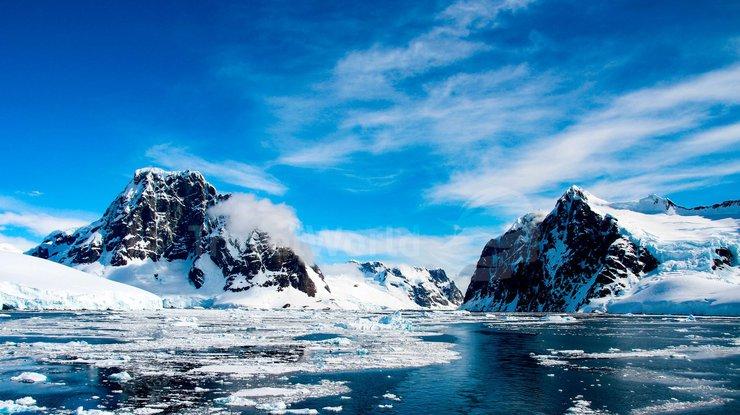 Впервые в истории появились фотографии обидателей дна Антарктиды