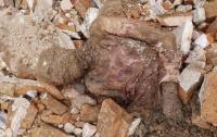 Найдена мумия предпоследнего шаха Ирана