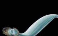 Первого в мире хищника показали на видео