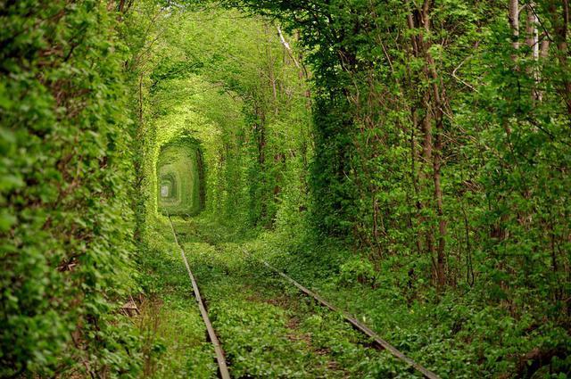 Въезд в Тоннель любви в Клевань сделают платным