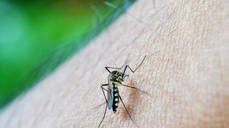 В Киеве зафиксировали вспышку малярии, есть жертвы