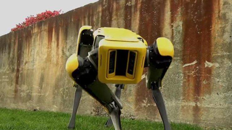 Как будет выглядеть восстание машин (видео)