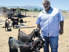 Руководство клуба рассчитывает заработать на козах