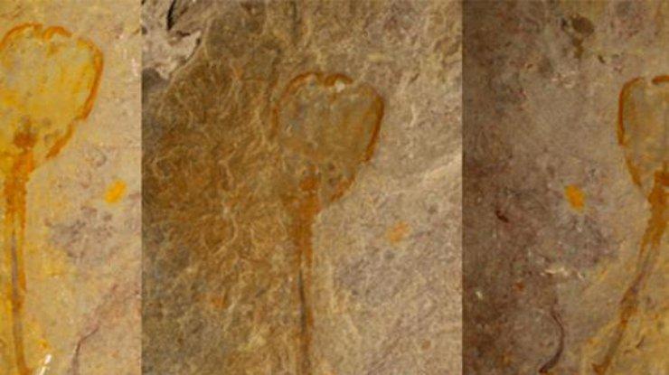 В США найден отпечаток древнейшего организма