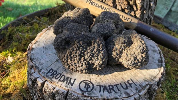 Italy's ingenious truffle scam