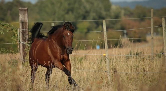 Развитием коневодства в Польше займутся эксперты и специалисты