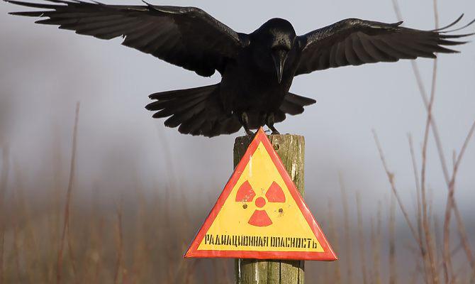 В Швеции заявили, что взрыв на Чернобыльской АЭС был ядерным