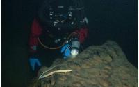Человеческую рыбу засняли на рекордной глубине