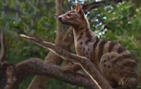 Ученые обнаружили в Африке новый вид древних хищников