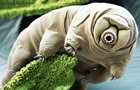 Ученые назвали животное, которое переживет всех