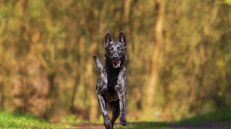 Собаки могут чуять рак - ученые