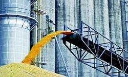 Аграрії семи областей України вже завершили збирання ранніх зернових - Мінагропрод