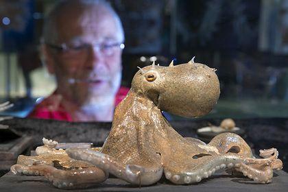 Ученые допустили инопланетное происхождение осьминогов
