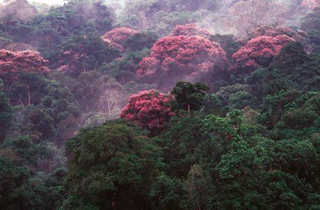 Ученые обнаружили удивительный побочный эффект изменения климата (ФОТО)