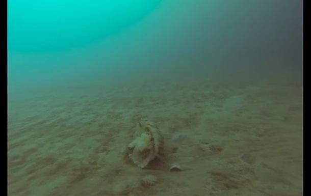 Рідкісну арктичну медузу зняли на відео