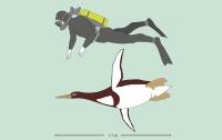 Ученые обнаружили гигантского доисторического пингвина