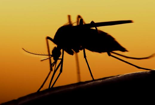 Восемь человек в Запорожской области заболели лихорадкой Западного Нила
