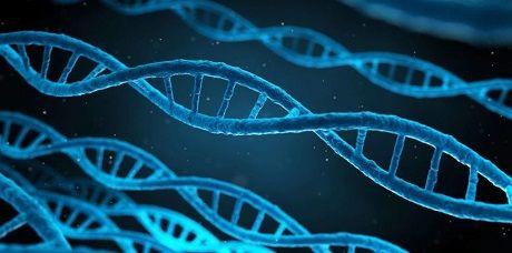Новая технология позволит увидеть 10 тысяч генов в одной клетке