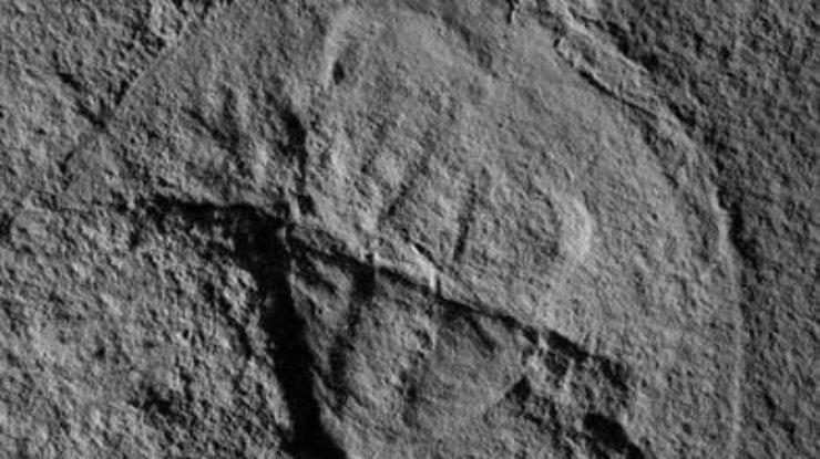 В Америке ученые нашли Дарта Вейдера (фото)