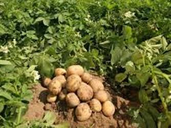 Украинские аграрии не станут переориентироваться на производство органики - мнение