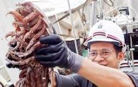 Огромного подводного таракана поймали у берегов Индонезии