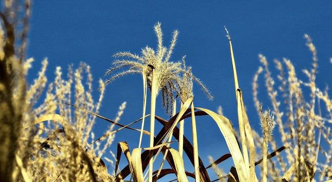 Растут потери урожая польских фермеров