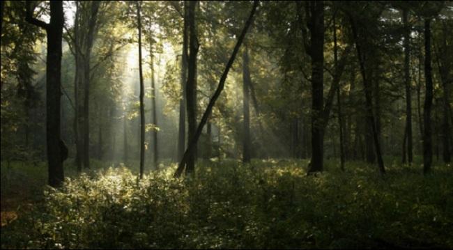 Заключение Суда ЕС по делу о вырубке деревьев в Беловежской пуще - 20 февраля