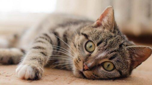 Сеть без ума от оптической иллюзии с котом: видео