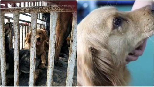 Собака, которую спасли от ужасной смерти, расплакалась: милые фото, видео
